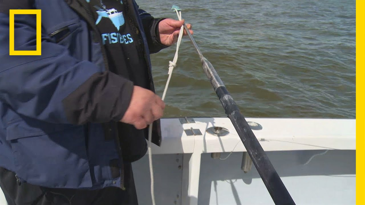 Fishing Tips How To Rig A Harpoon Wicked Tuna Outer