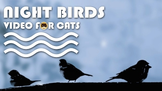 CAT TV - Night Birds. Bird Video for Cats to Watch.
