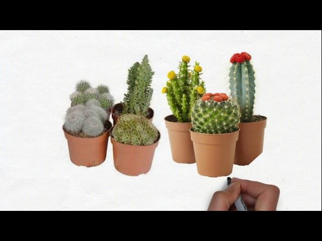 [Super Solution] Ciri Khusus Kaktus