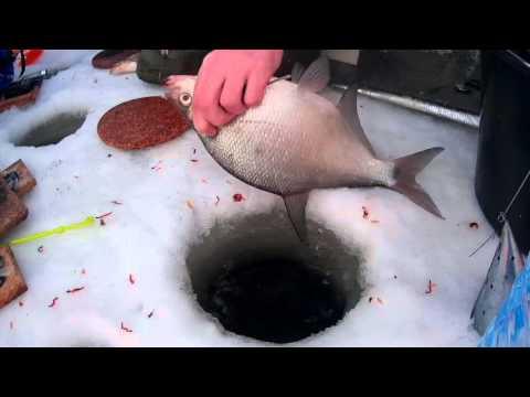 крюково кама рыбалка форум