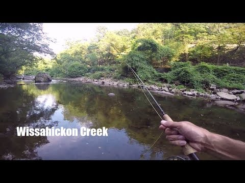 Wissahickon Creek Fly fishing August 2017