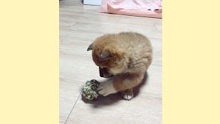 장난감을 처음 본 새끼 강아지