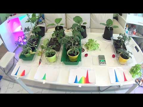 Какой свет любят растения? Итоги эксперимента.