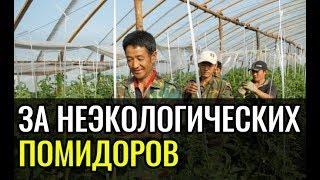 В Дагестане китайских рабочих закидали помидорами