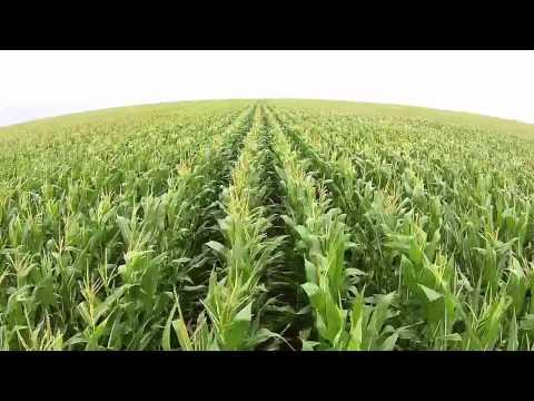 champs-de-maïs---tozzi-green---février-2015