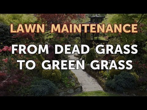 From Dead Grass to Green Grass