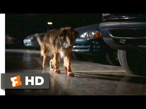 Bowfinger (4/10) Movie CLIP - High-Heel Wearing Dog (1999) HD