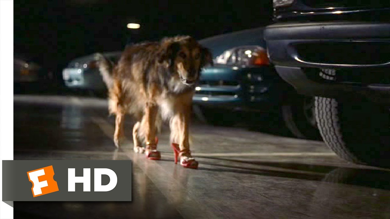 Bowfinger 4 10 Movie Clip High Heel Wearing Dog 1999