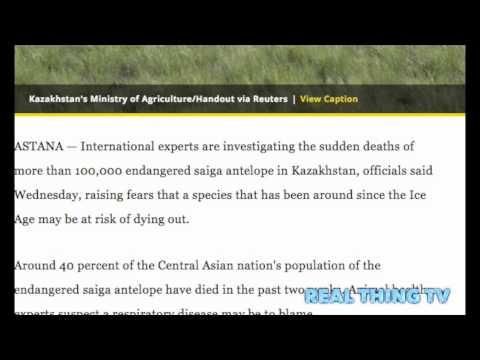 121,000 antelopes  suddenly dropped dead?