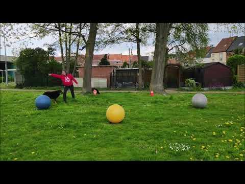 TRBG3 Round 3 Level I. Rififi + Kristel Osselaer - Belgium