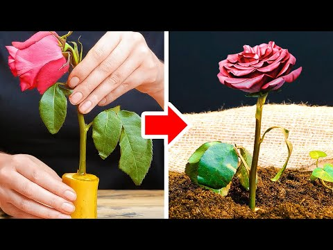 35 Helpful Gardening Tips For Plant Lovers || Easy Ways to Grow And Collect Food In Your Garden!