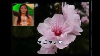 Hoa Đào Thương Nhớ (Nhạc Nhật) - Bích Thuần (Karaoke)