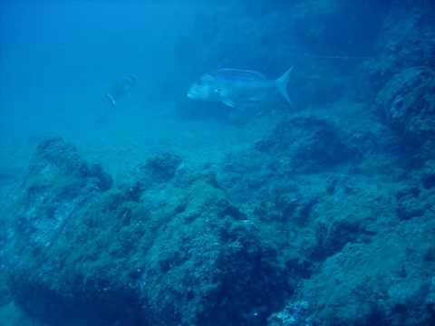 Immersioni isola d 39 elba blu immersion diving center lacona corbella dentici youtube - Dive center blu ...