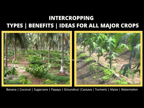 Intercropping: Types   Benefits   Inter crop guide for major crops - 2020