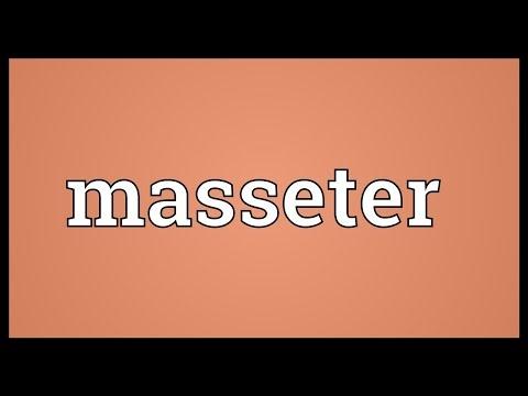 Header of masseter