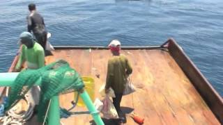 Illegal Hulbot Hulbot Trawling In Daanbantayan Municipal Waters