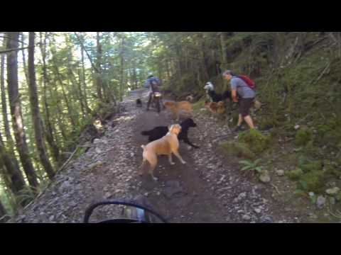 Pack of Dogs ATTACKS dirtbikes at Lava Flows