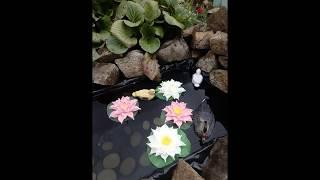 Обзор. Лилии для пруда на даче.(из Изолона)