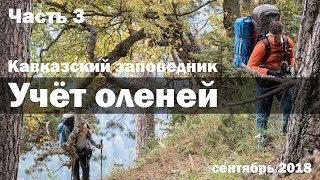 Олени жутко ревут в лесу. Учёт оленей 2018 в Кавказском заповеднике. Часть 3.