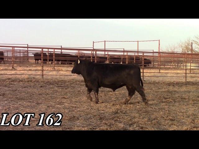 Mead Angus Farms Lot 162