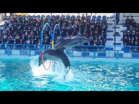 Dolphin Show At Maritime Museum Karachi