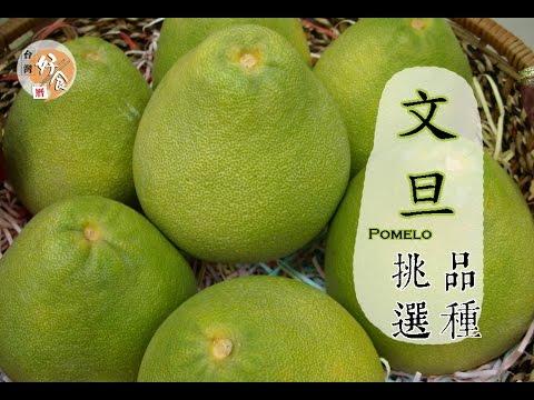 【秋】文旦柚子如何挑選才好吃