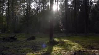 Заповедный лес парк отеля Бухта Коприно