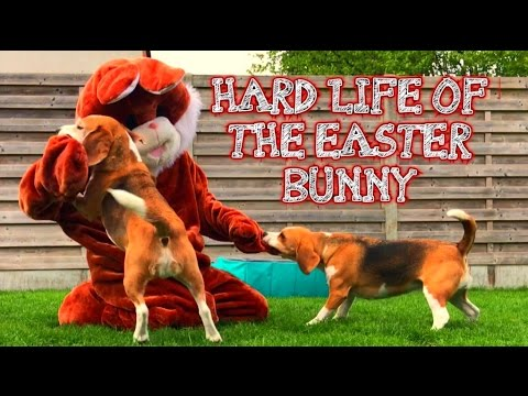PRANKING MY DOGS GOES WRONG IN BUNNY COSTUME!
