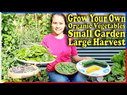 Grow your Own Organic Vegetables Small Garden Space Large Harvest Manila London Life In The UK Pinoy