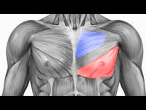 Easiest Way To Bring Up Your Chest Lower Pecs