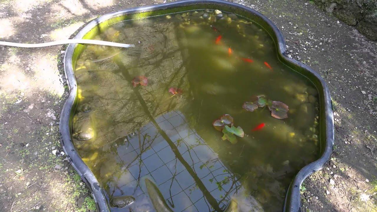 Laghetto carpe pesci rossi e ninfea 12 youtube for Pesci rossi laghetto