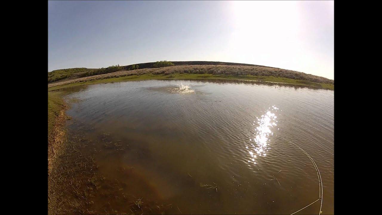 Fly fishing for carp blackfoot reservoir in idaho youtube for Fly fishing boise idaho