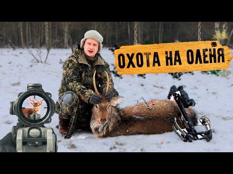 Охота из Арбалета на Оленя 2020!