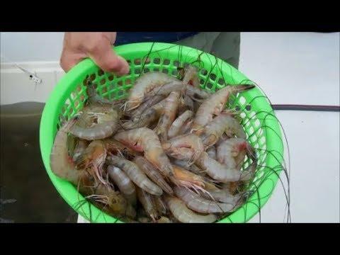 Buy Fish Off Dock In Biloxi, MS.  Fresh Seafood, Enjoy Fresh Shrimps Off Mississippi Sound.