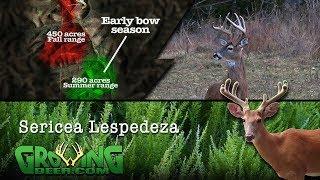 managing-white-tailed-deer-and-habitat-pre-season-patterns-450-growingdeer-tv