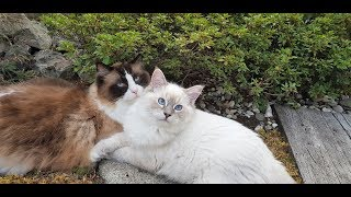 How 2 Cats Bond Like Brothers