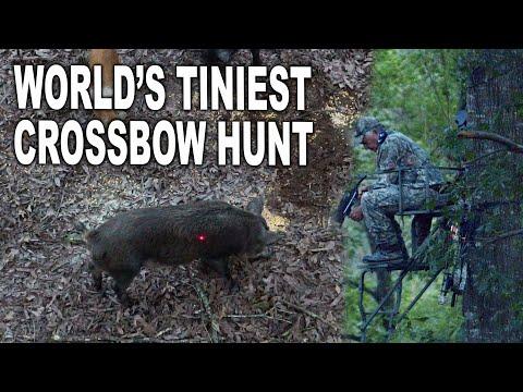 Mini Crossbow VS Feral Hog