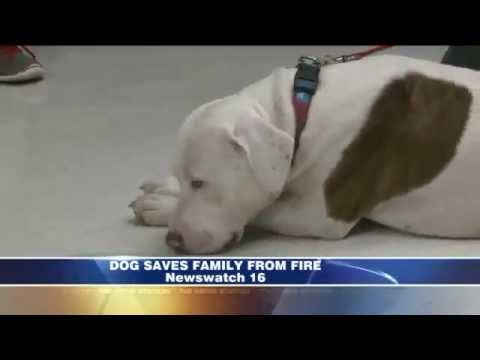 Dog Saves Family's Life