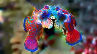 редкие морские рыбки смотреть обязательно 3