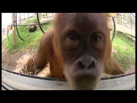 Monkey sting 1