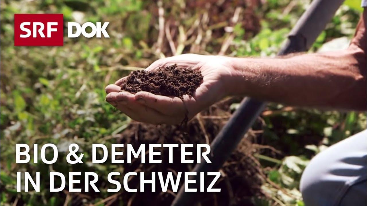Download Bio und Demeter in der Schweiz – Spurensuche zu den Anfängen der Öko-Landbaus   Doku   SRF Dok