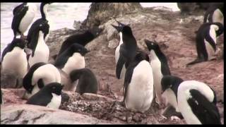 Hurtigruten Arctic Greenland Antarctic Norwegian Cruise Vacations & Travel Videos