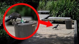 SMARTEST Animals In The World!