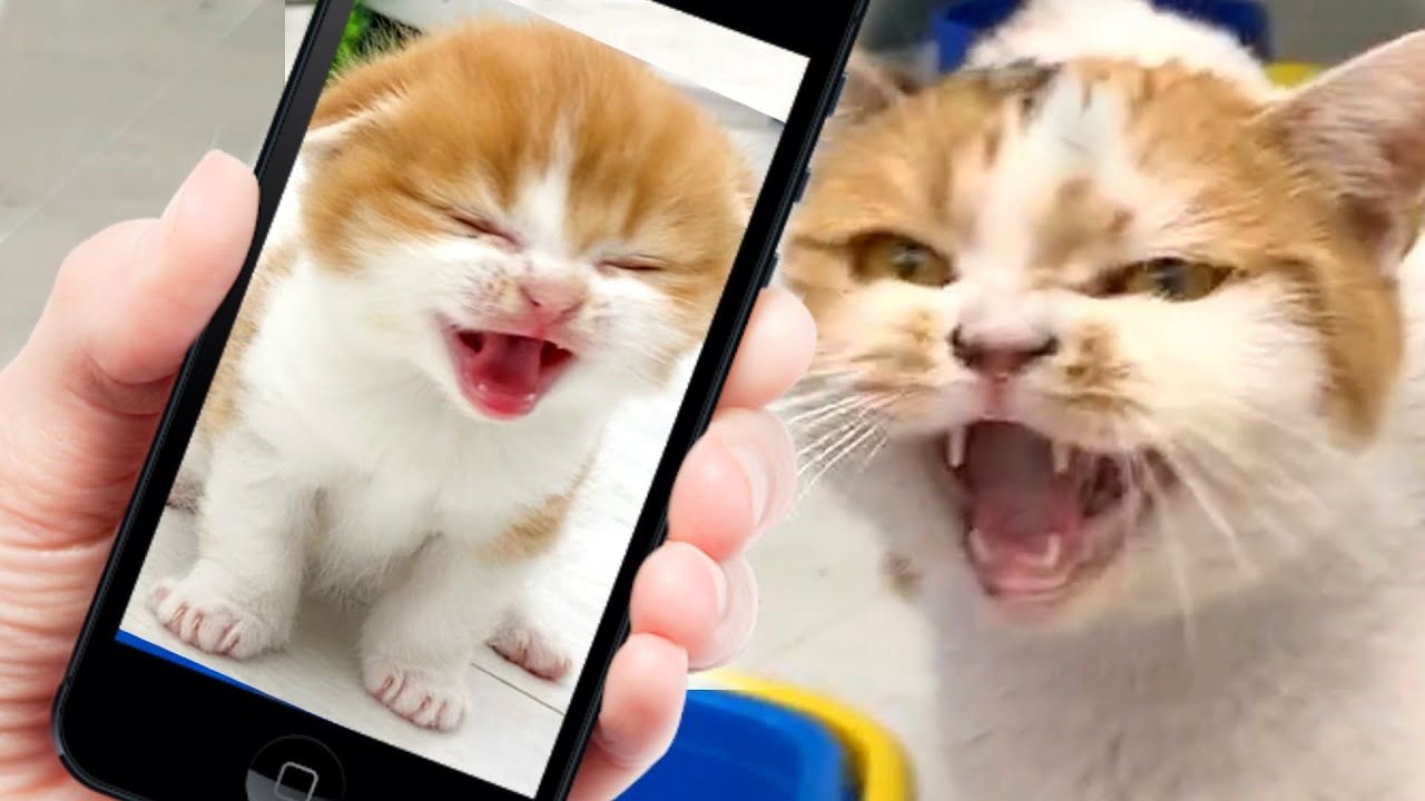 Reaction mom cat to meow of kitten from the phone
