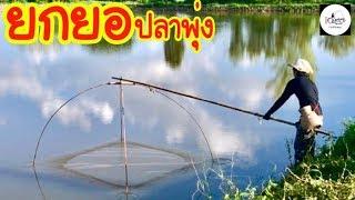 ยกยอ ร่องขุ่น Fishing lifestyle Ep.137