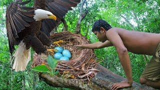 Primitive Technology - Found A Eagle Nest in Forest n Eating to Survival