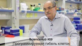 ScienceHub #09: Программируемая гибель клеток