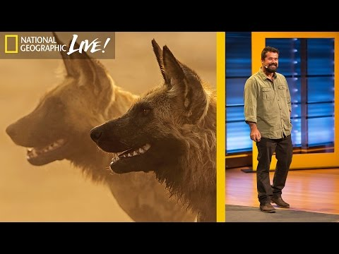Growing Up in the African Wild : Beyond 'Savage Kingdom'  (Part 1)   Nat Geo Live