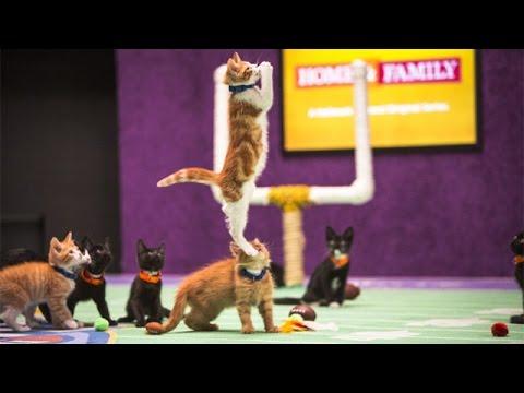 Beth Stern's Kitten Bowl Recap - Kitten Bowl