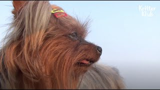What This Dog Sadly Watches Over The Sea Is.. | Kritter Klub